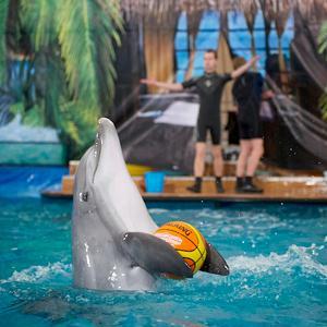 Дельфинарии, океанариумы Шлиссельбурга