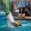 Дельфинарии, океанариумы в Шлиссельбурге