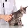 Ветеринарные клиники в Шлиссельбурге